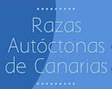 Razas Autóctonas de Canarias 1: Vaca palmera y vaca canaria