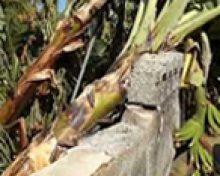 Valoraciones sobre temporal del viento en La Palma | Crónicas del Campo