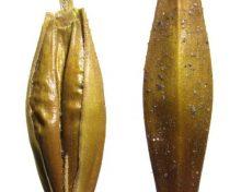 Años sembrando campo canario con reliquia, cebada prehispánica | EFE futuro