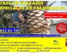 Curso de Trabajos Especiales en Palmeras | 1, 2 y 3 de Marzo