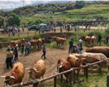 Normativa Transporte Animal | Crónicas del Campo