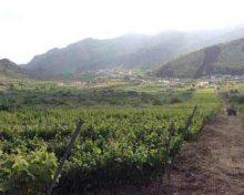 Ayuda por hectárea para el mantenimiento del cultivo de vides destinadas a la producción de vinos con Denominación de Origen Protegida (DOP)