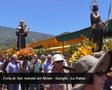 Feria de San Antonio del Monte 2017   Crónica del Campo