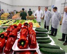 Crece la comercialización interior y exterior de frutas y hortalizas del Archipiélago