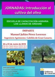 Introducción al cultivo del olivo @ Escuela de Capacitación Agraria de Los Llanos de Aridane | Los Llanos | Canarias | Spain