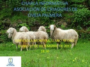 Charla Informativa Asociación de Criadores de Oveja Palmera @ Edificio La Montera, Llano Negro | Spain