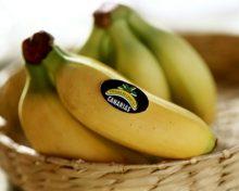 ¿Tiene futuro el Plátano de Canarias?
