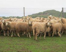 Ayudas al sector ganadero
