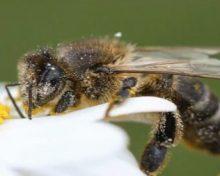 Ayudas a la apicultura en el marco de los programas nacionales anuales