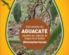 Enfermedades del aguacate causadas por especies de hongos de la familia Botryosphaeriaceae | Agrocabildo