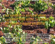 Revista El Campo Palmero nº 128