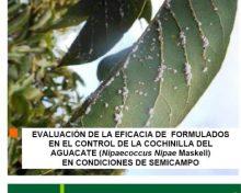 Evaluación de la eficacia de formulados en el control de la cochinilla del aguacate | Agrocabildo
