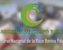 I Concurso Nacional de la Raza Bovina Palmera | Canarios de Campo y Mar