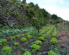Comercialización de hortalizas a través de SODEPAL