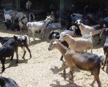 Ampliación subvenciones para la creación de empresas por jóvenes ganaderos y ganaderas