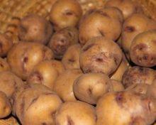Ayuda a la comercialización local de frutas, hortalizas, raíces y tubérculos alimenticios, flores y plantas vivas recolectadas en Canarias
