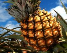 Acuerdan revisar la instrucción para el control de la importación de productos tropicales frescos y envasados