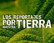 Reportaje 25 años C.R.D.O. Vinos de La Palma | Crónicas del Campo