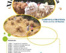 El Frescal celebra la 12 edición de la 'Siega y trilla' tradicional del proyecto 'De la tierra a la mesa