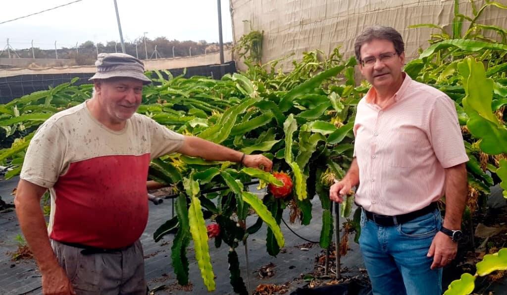 Cultivo de Pitaya, isla de La Palma